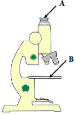 The microscope labelled a and b microscopeg ccuart Gallery